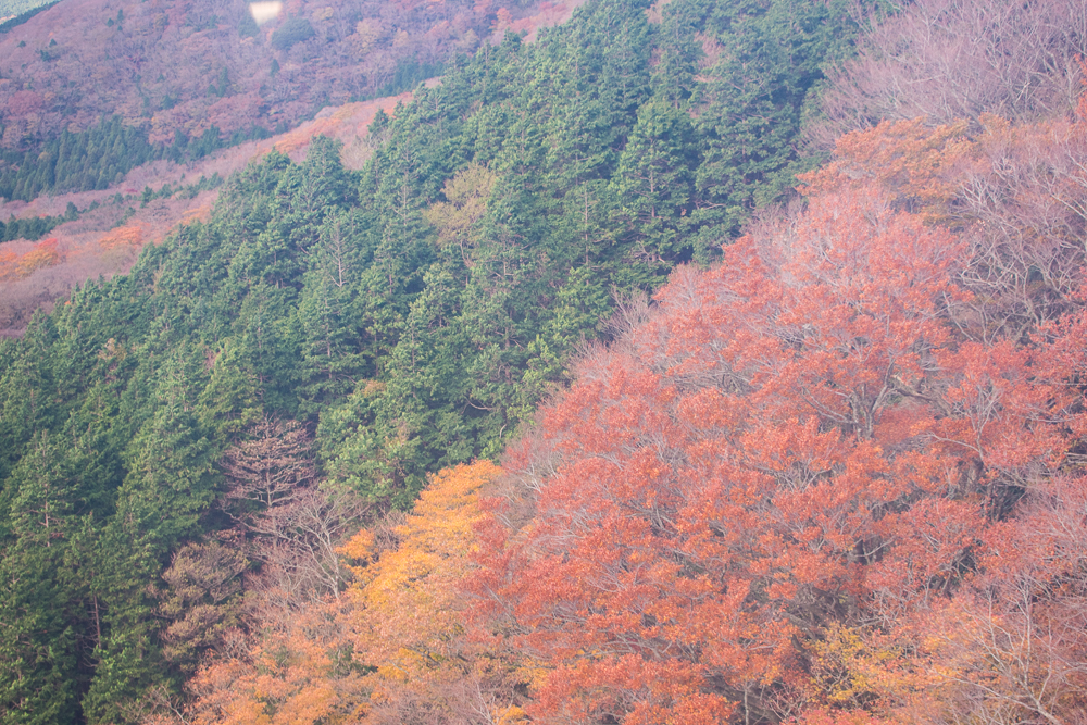 hakone autumn