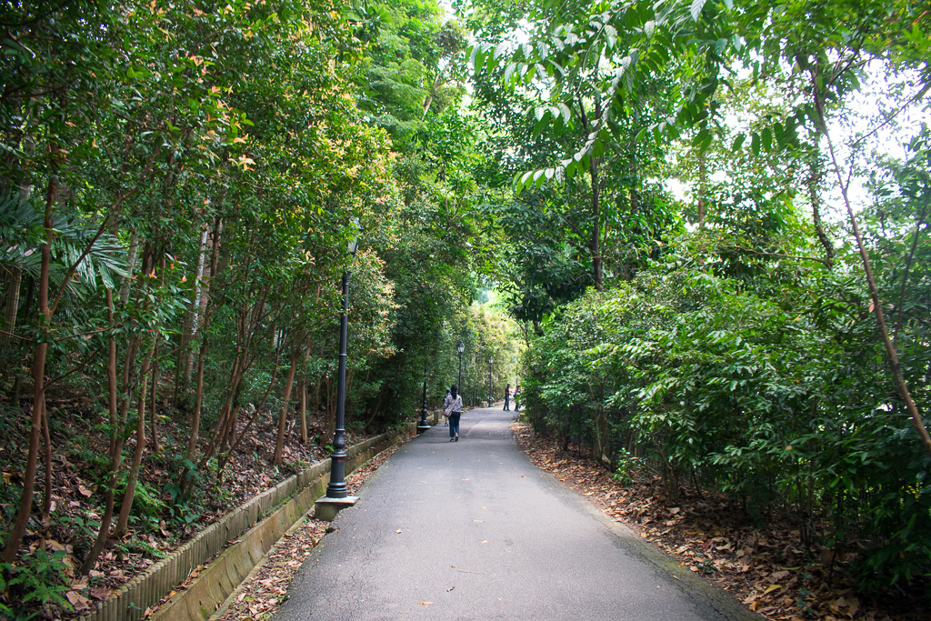 singapore botanic gardens review