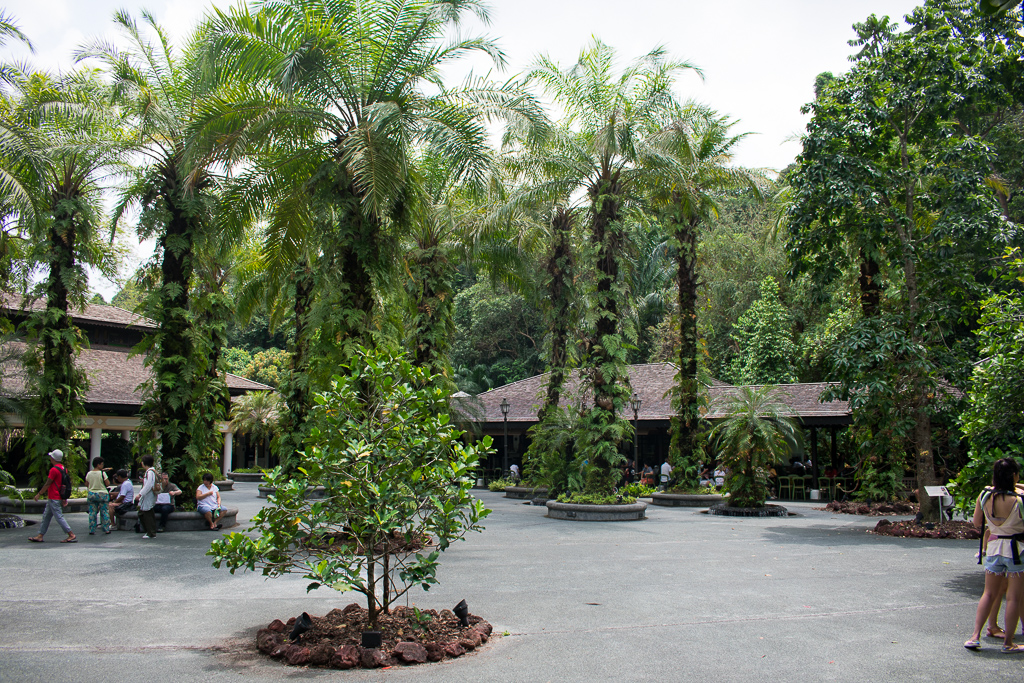 singapore botanic gardens photos