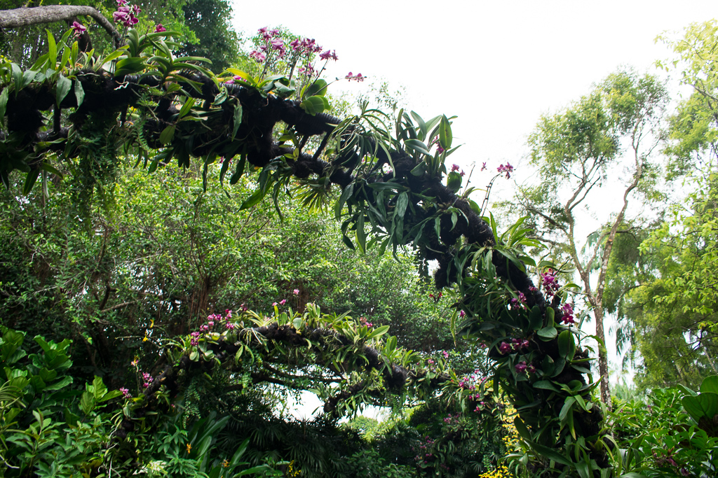 attractions at singapore botanic gardens