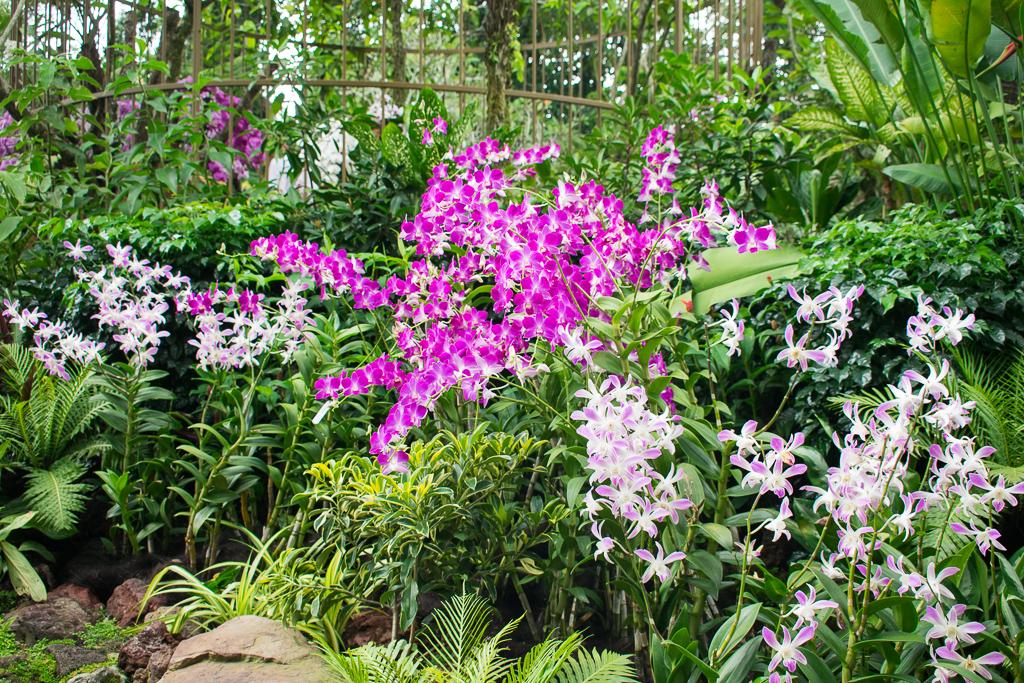 singapore botanic gardens in 2018