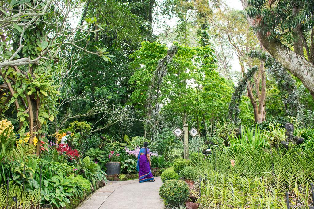 singapore botanic gardens plants