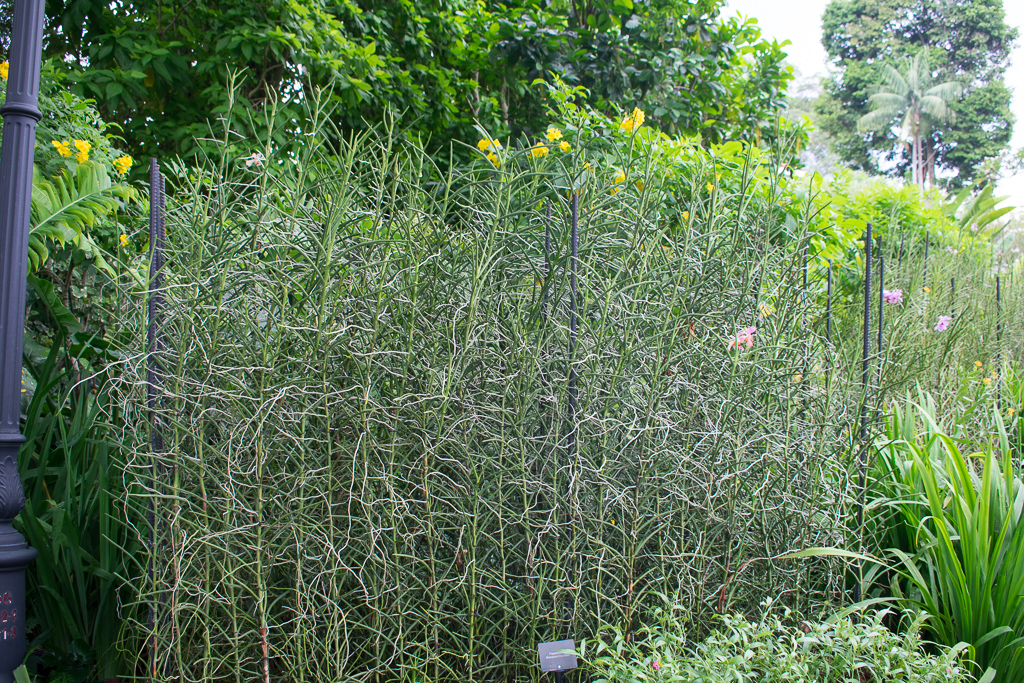 botanic gardens sg