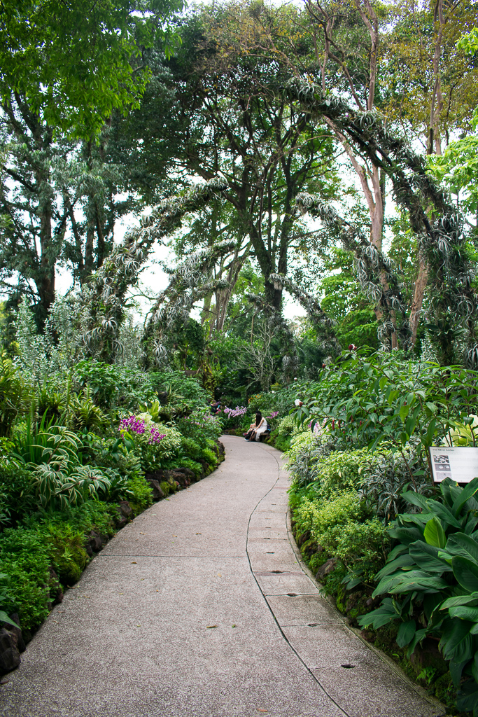 sightseeing at singapore botanic gardens