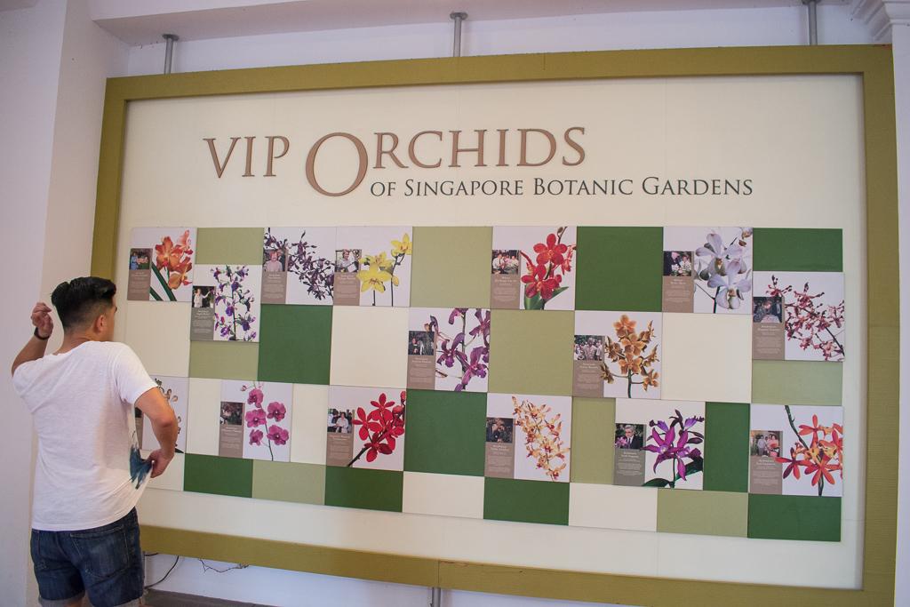 singapore botanic gardens orchid garden