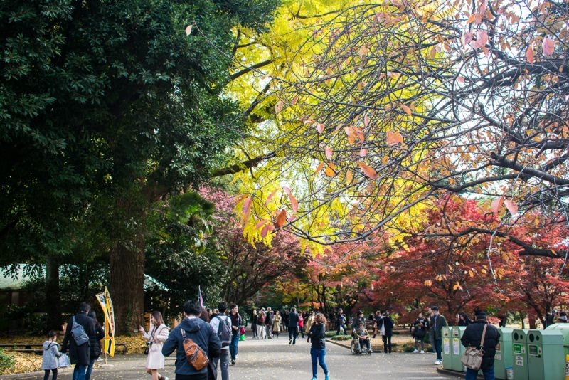 shinjuku gyoen autumn