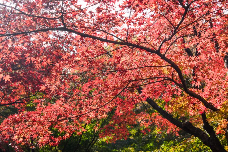 what to do in shinjuku gyoen