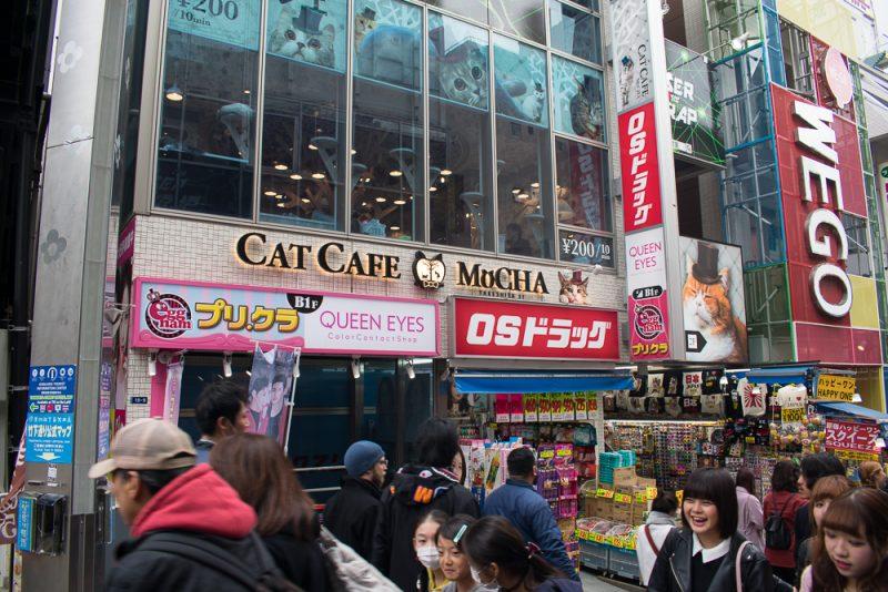 cat cafe takeshita street