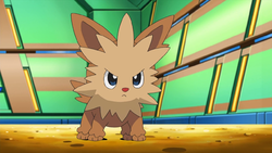 what is the cutest pokemon