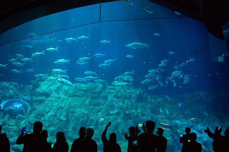 ocean park aquarium in hong kong