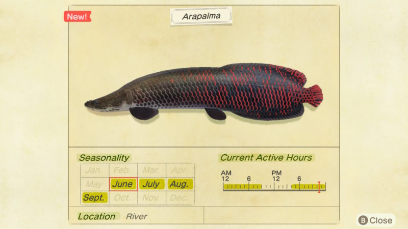 how to find arapaima - animal crossing new horizons