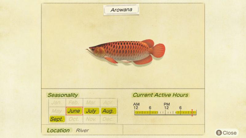 how to fish for arowana in acnh