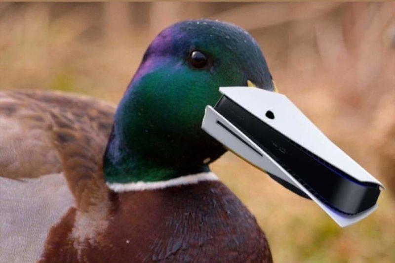 bird ps5 meme